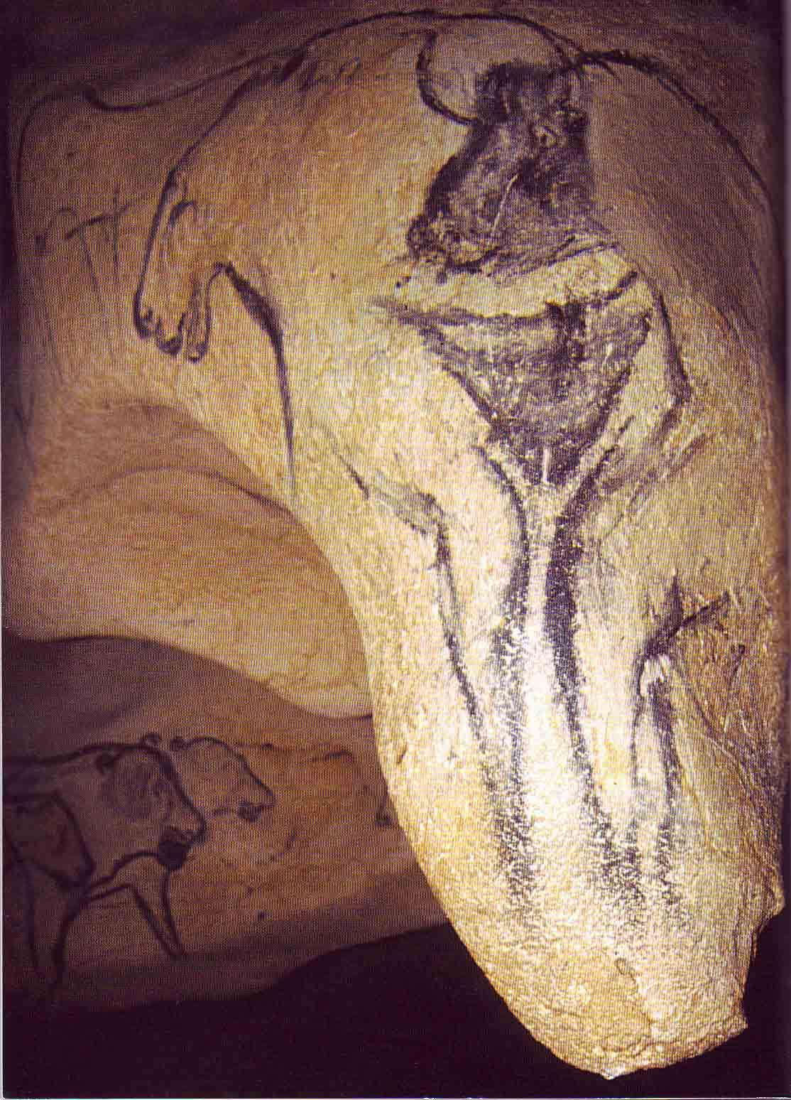 5. Venus-Chauvet